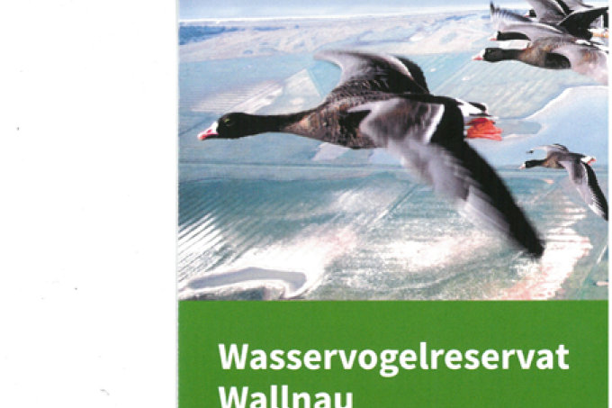 Wallnau-Flyer